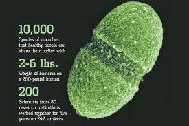 Ember-baktérium szimbiózis