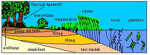 http://www.tankonyvtar.hu/konyvek/novenytan/novenyt