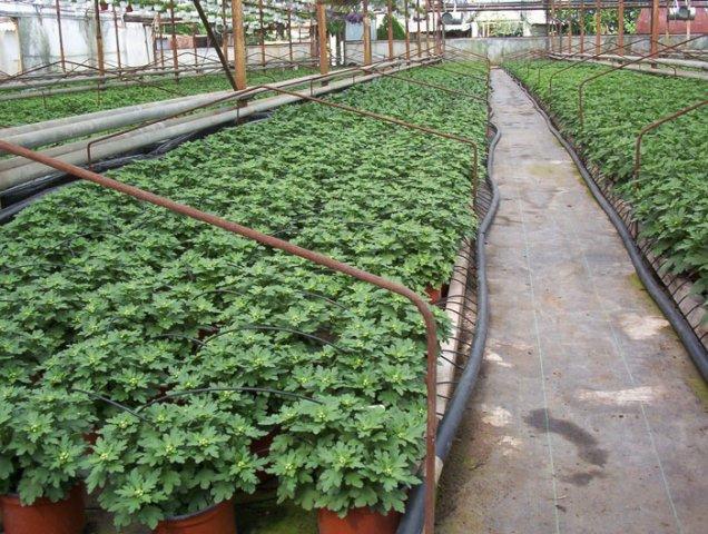 Növényházi öntözés