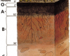 http://upload.wikimedia.org/wikipedia/commons/9/95/Soil_profile.png