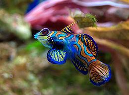 Vízben élő állatok